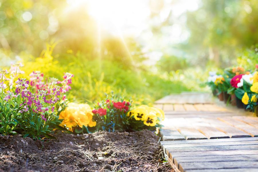Blühendes Für Den Garten In Korschenbroich Das Stadtjournal